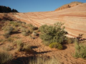Valley of Fire 16